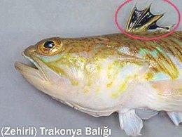 Zehirli balık mı öldürdü?