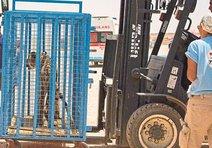 Türkiye, savaşın ateşinden hayvanları da kurtarıyor
