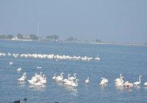 İnciraltında flamingo cenneti