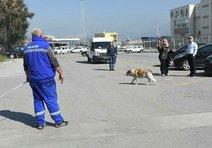 Alsancakta köpek toplama gerginliği