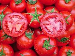 Çal domatesi Rusya yolunda