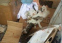 Pitbulllar 17 kediyi parçaladı