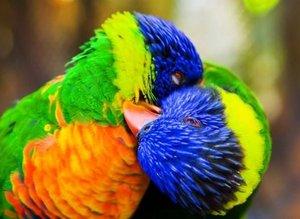 En renklileri...