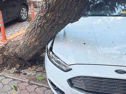 Duran araca ağaç çarptı!