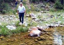 Koruma altındaki kızıl geyikler katliama uğradı!